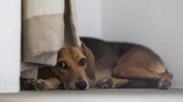Viele Hunde haben Angst vor Silvester (Foto: RuhrkanalNEWS)